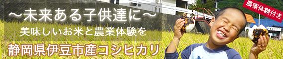 【無料農業体験付き】セキデンファームさんの静岡県伊豆市産コシヒカリ